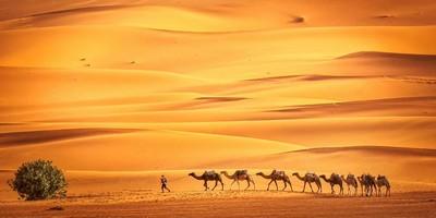 tour de Marrakech al Desierto