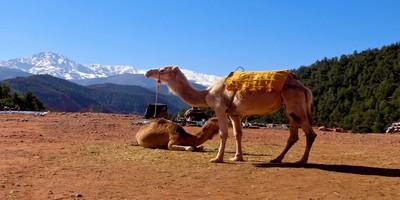 Desert tour Marrakech to Fes